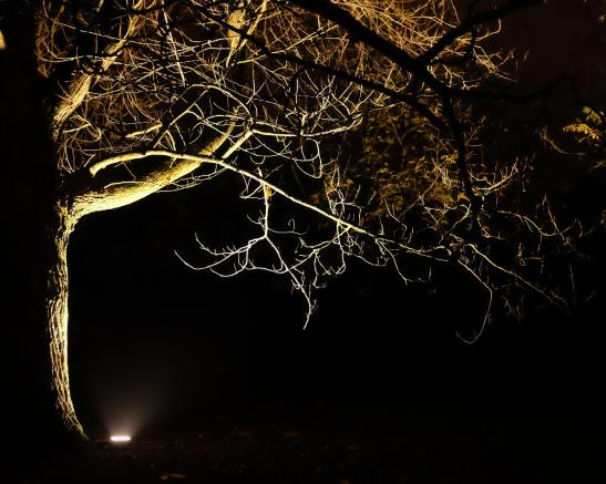 dark_tree