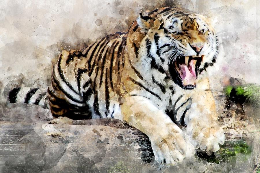 tiger-2864785_1920