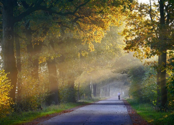 autumn-1751764_1920